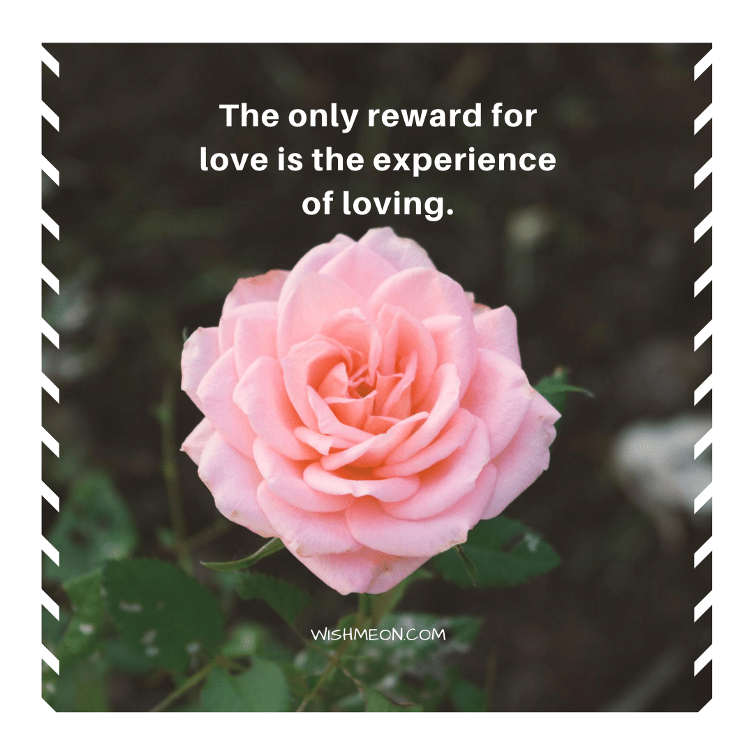 The Only Reward For Love Quotes