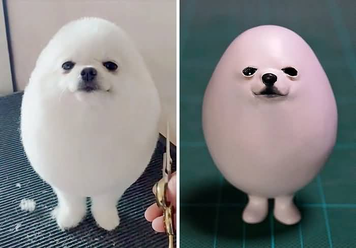 Cute Puppy Haircut Grooming Animal Meme