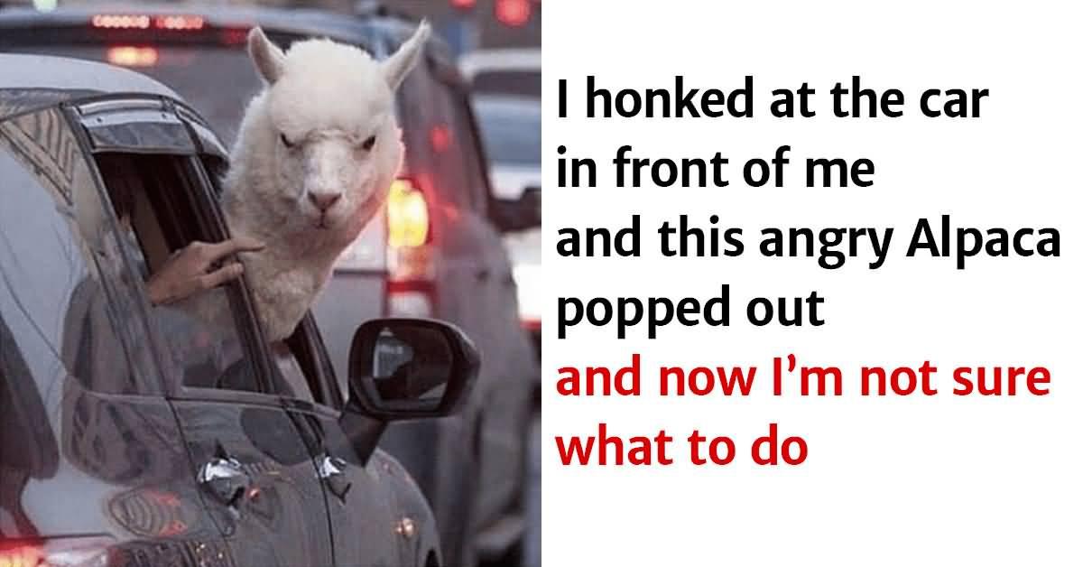 I Honked At The Car Animal Meme