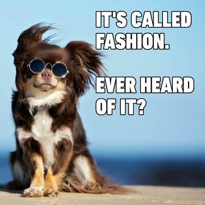 It's Called Fashion Ever Animal Meme