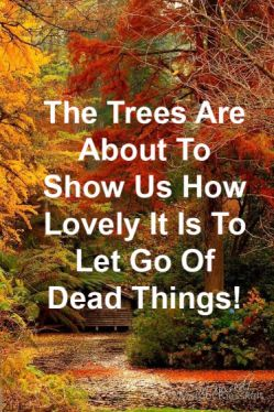 Lovely It Is To Let Go Of Dead Things