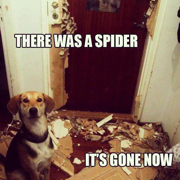 There Was A Spider Animal Meme