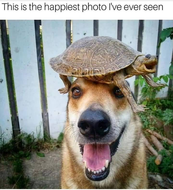 This Is The Happiest Animal Meme