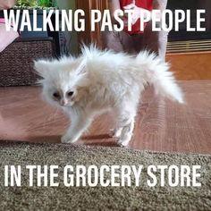 Walking Past People In Animal Meme