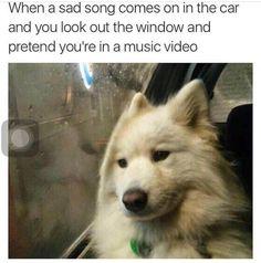 When A Sad Song Animal Meme